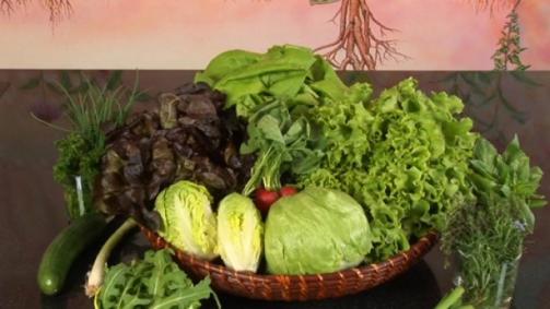 Gesunde Küche mit Schweizer Salaten