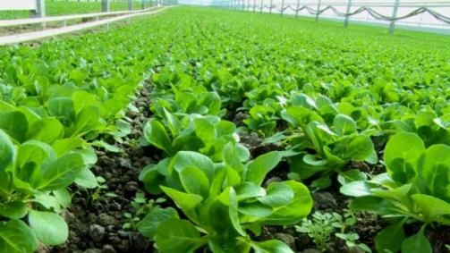 Légumes biologiques frais en hiver