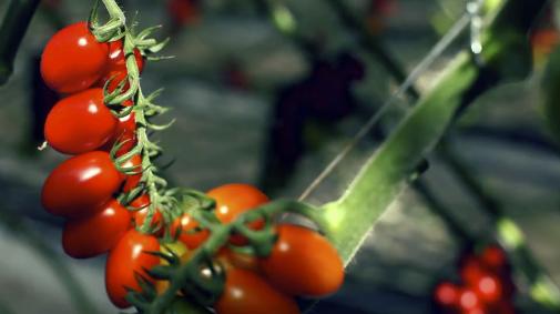 Beerstecher: 100 Jahre Gemüsekultur
