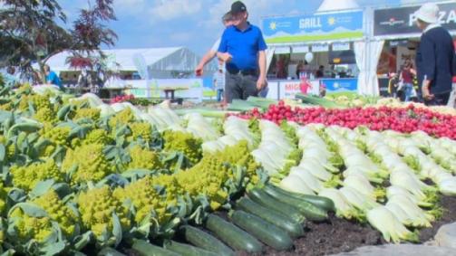 Fête des légumes 2014 : rétrospective