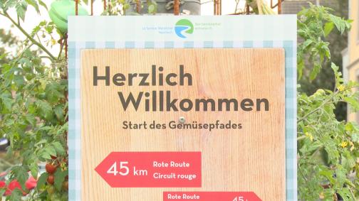 Erlebe den Gemüsebau hautnah auf dem Gemüsepfad der Schweiz