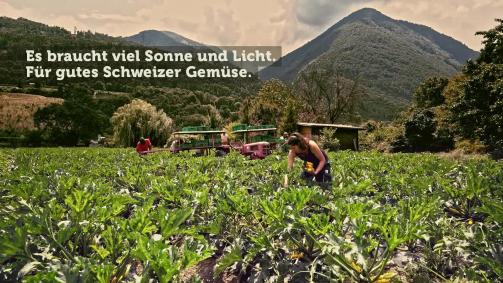 Juli: Es braucht viel Sonne und Licht, für gutes Schweizer Gemüse.