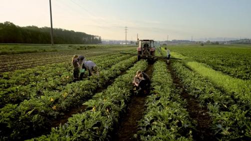 Juni: Es braucht Generationen. Für gutes Schweizer Gemüse.