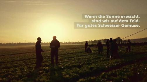 Mai: Wenn die Sonne erwacht, sind wir auf dem Feld. Für gutes Schweizer Gemüse.
