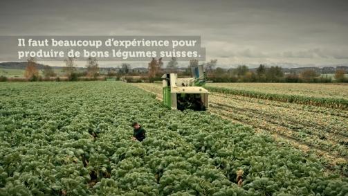 Novembre: Il faut beaucoup d'expérience pour produire de bons légumes suisses.