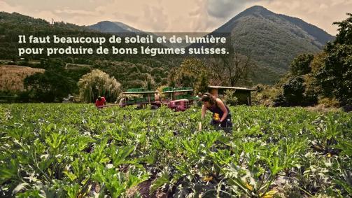 Juillet: Il faut beaucoup de soleil et de lumière pour produire de bons légumes suisses.