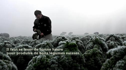 Janvier: Il faut se lever de bonne heure pour produire de bons légumes suisses.